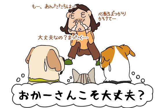27112020_dog1_2.jpg