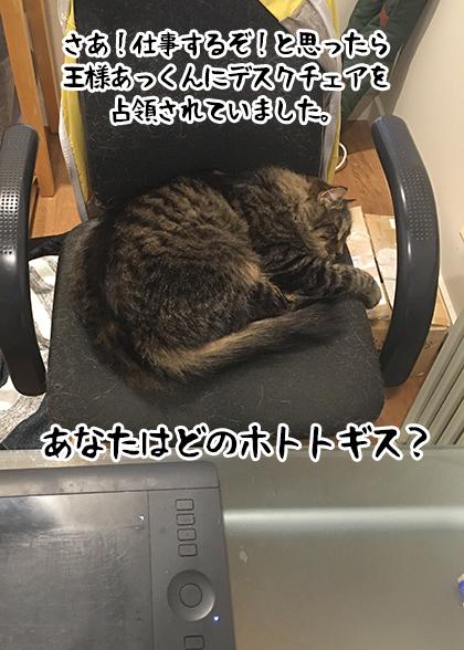 06062021_dogpic10.jpg