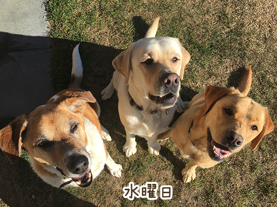 09052021_dog3Wednesday.jpg