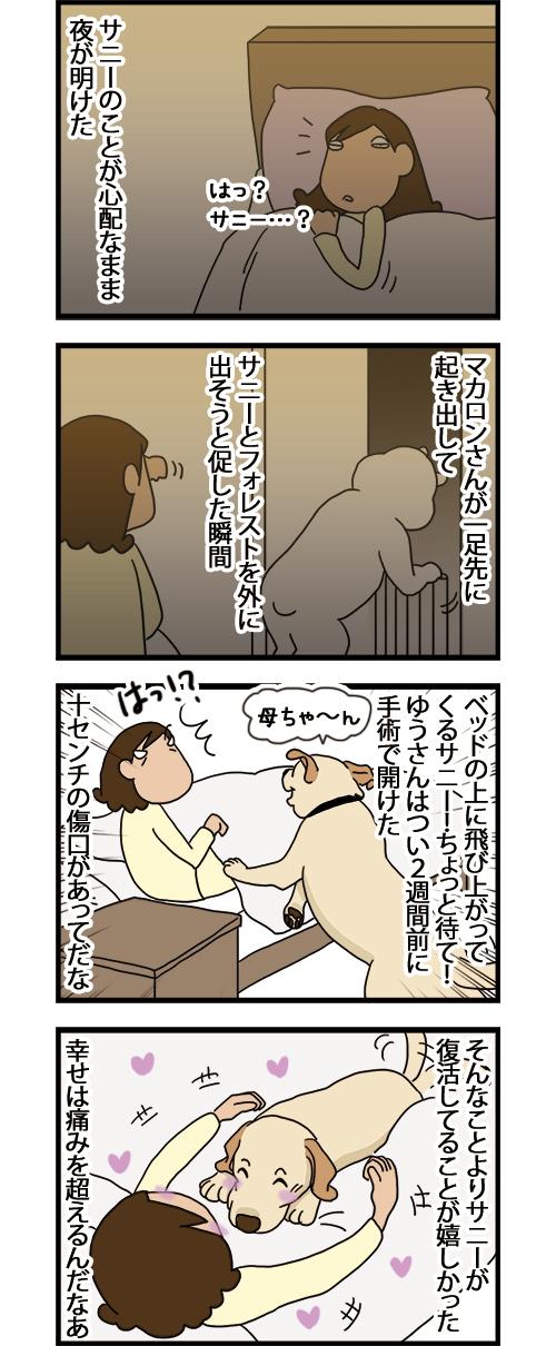 13052021_dogcomic.jpg