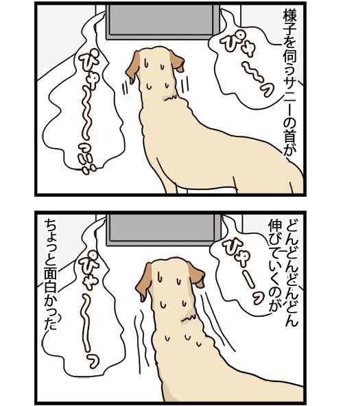17052021_dogcomic_2.jpg