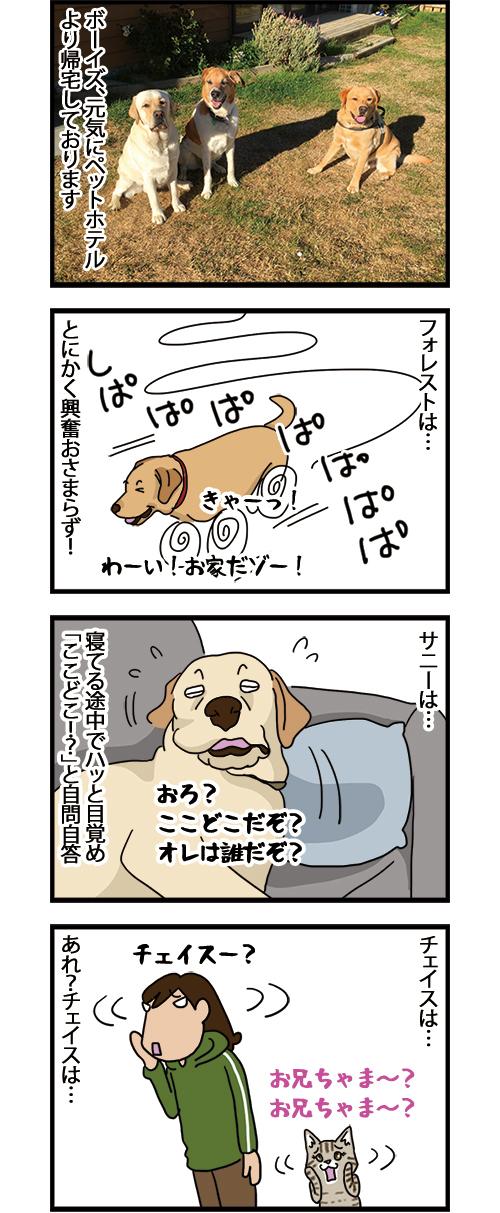 21022021_dogcomic_1.jpg