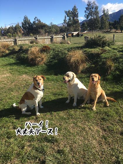 28052021_dogpic1.jpg