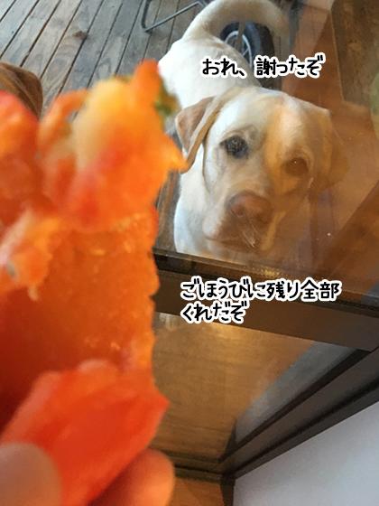 20062021_dogpic6.jpg