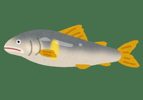 fish_ayu2.png