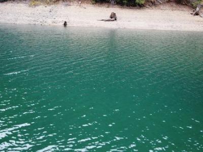 Lake McCloud 041511-018