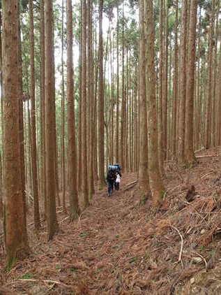 剣山へもう一度 (2) ~長いアプローチだ~