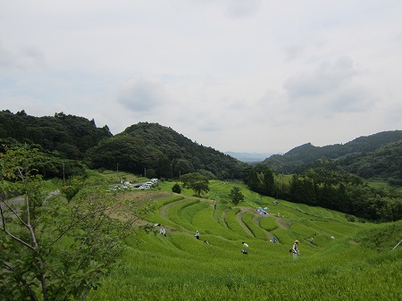 大山千枚田 4