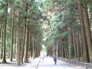 matushima+046_convert_20110309123206.jpg
