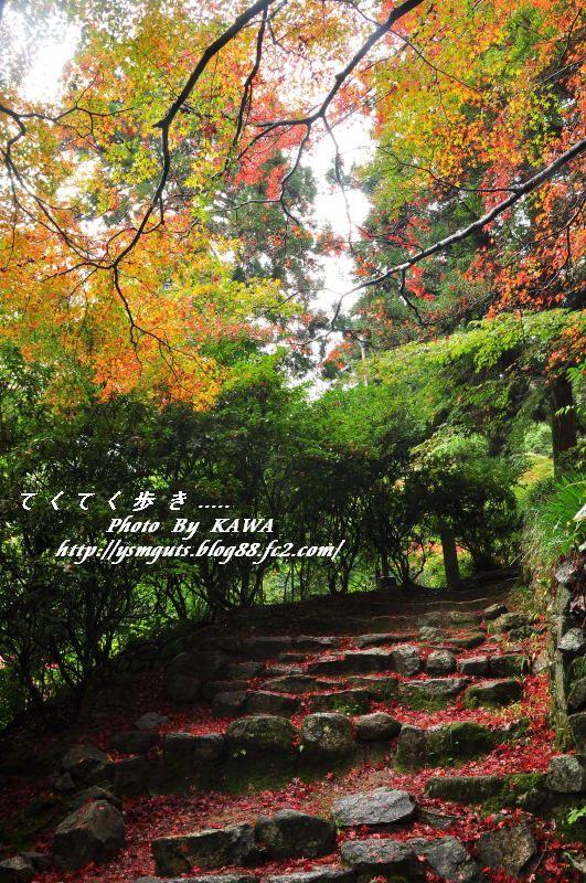 てくてく歩き紅葉 西山興隆寺にて