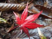 紅葉の見どころ
