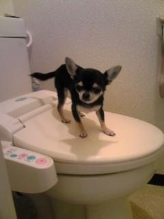 ukiwa トイレ