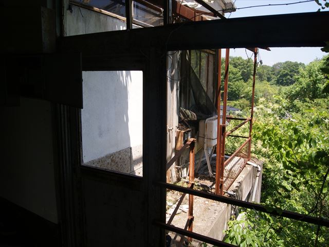 буйная растительность за окнами