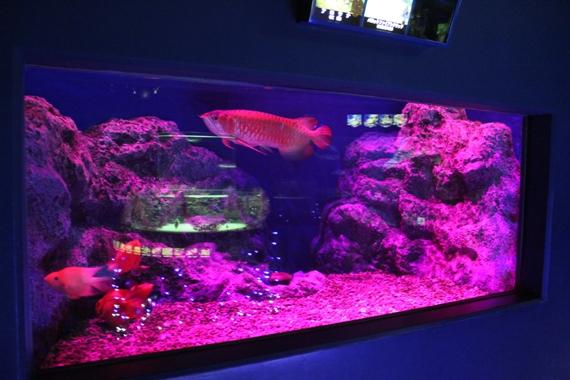 山の水族館 夜間営業 ナイト水族館 光る水槽