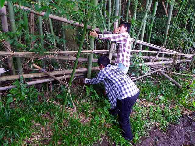 竹の切り出し2