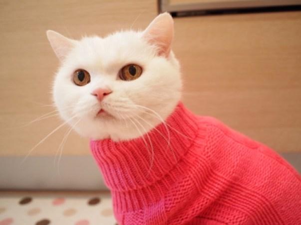 「とっくり セーター」の画像検索結果