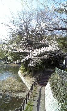 「あるがままに生きる」-神丘公園
