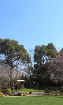 $「あるがままに生きる」-空と芝生