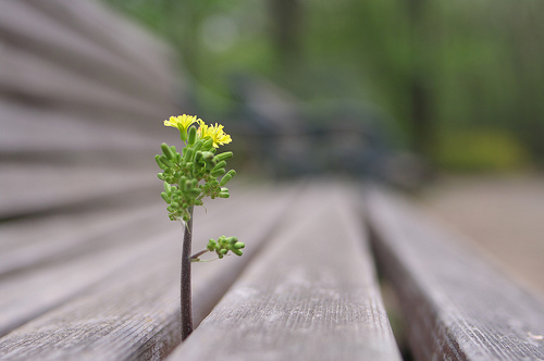ニョキっとな:Hello from the gap of the bench. - 無料写真検索fotoq