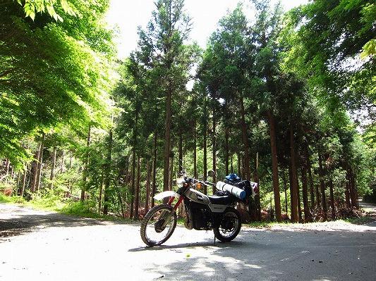 高山林道 1