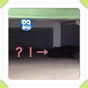 {E6F5CC43-A7AE-4FF5-A8F6-DACB41599472:01}