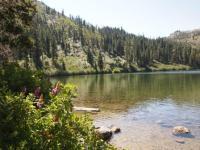 z web castle lake 2015-07-20 013