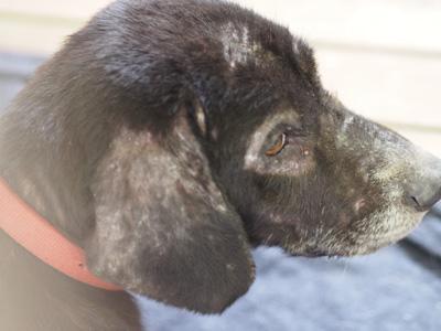 宮崎犬管理所-16-03-29-008