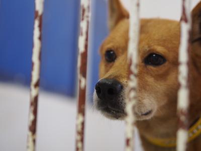 宮崎犬管理所-16-03-29-017