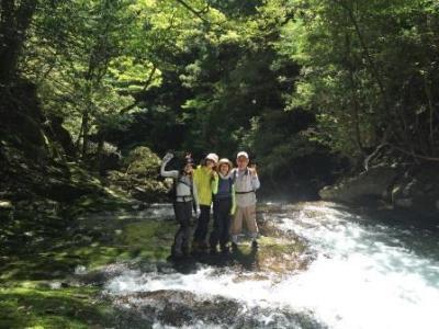 web nachi shinpi walk