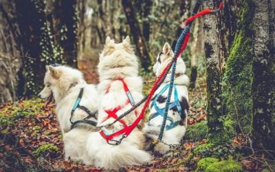 Comment choisir le bon harnais pour son chien ?
