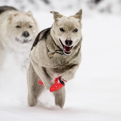 bottine pour chien fast n light