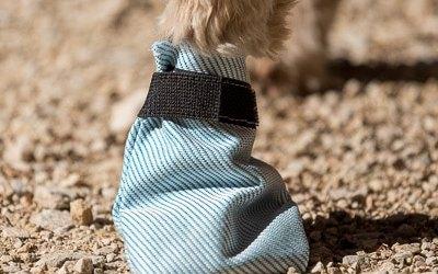Comment choisir les bottines pour son chien ?