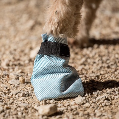 bottine pour chien armor