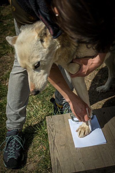 mesure patte chien bottines