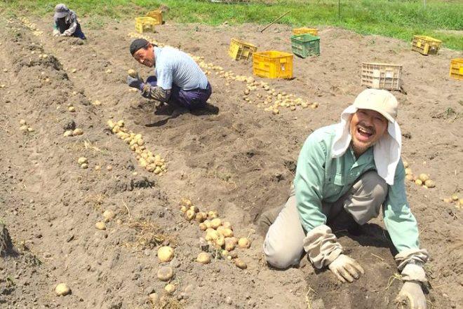 ジャガイモ収穫中のこうちゃん