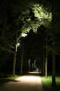 Allee_2979 (13)