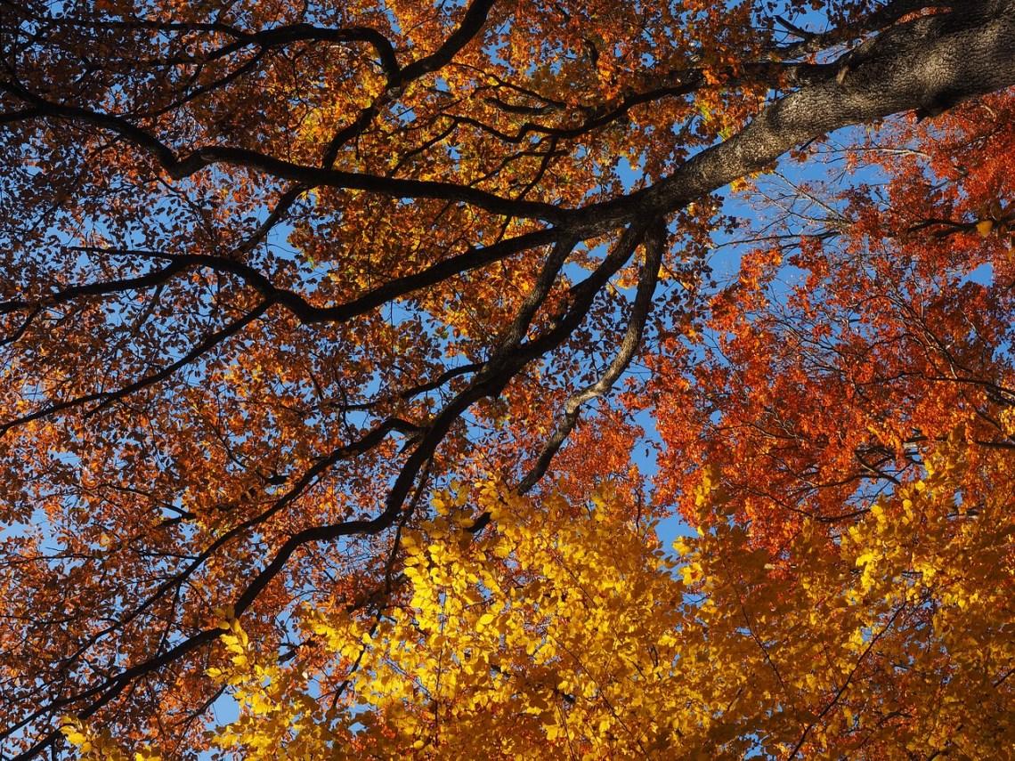 autumn-2875986_1280