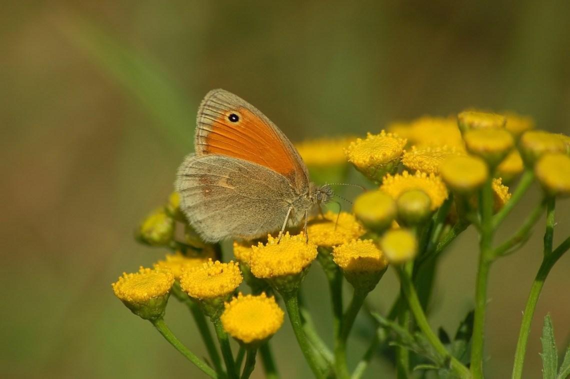 moth-4444972_1280