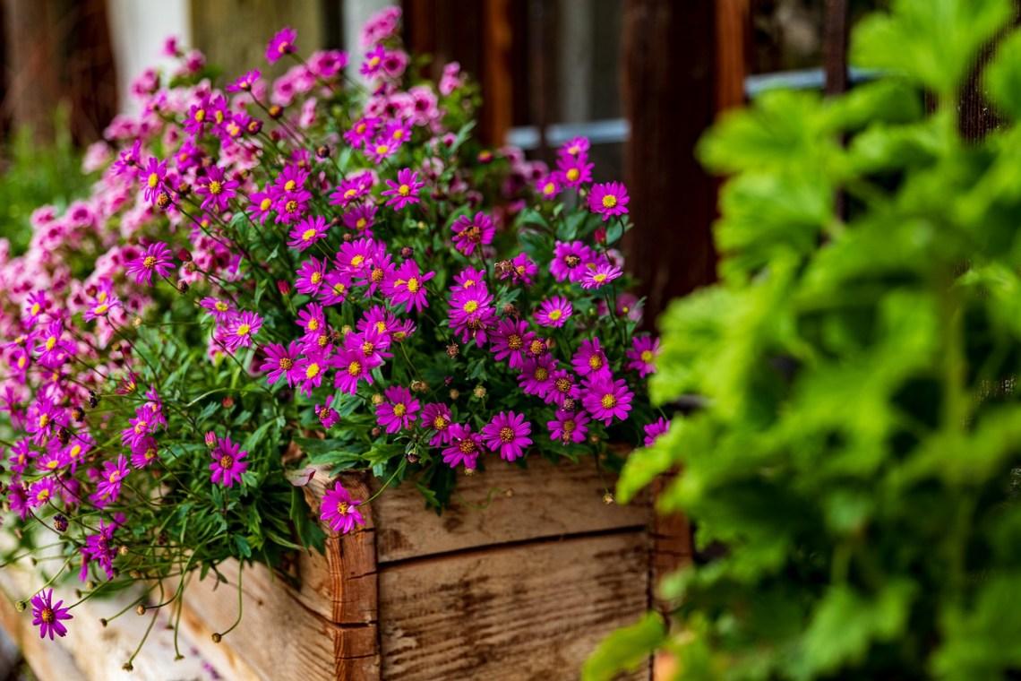 flowers-4322225_1280