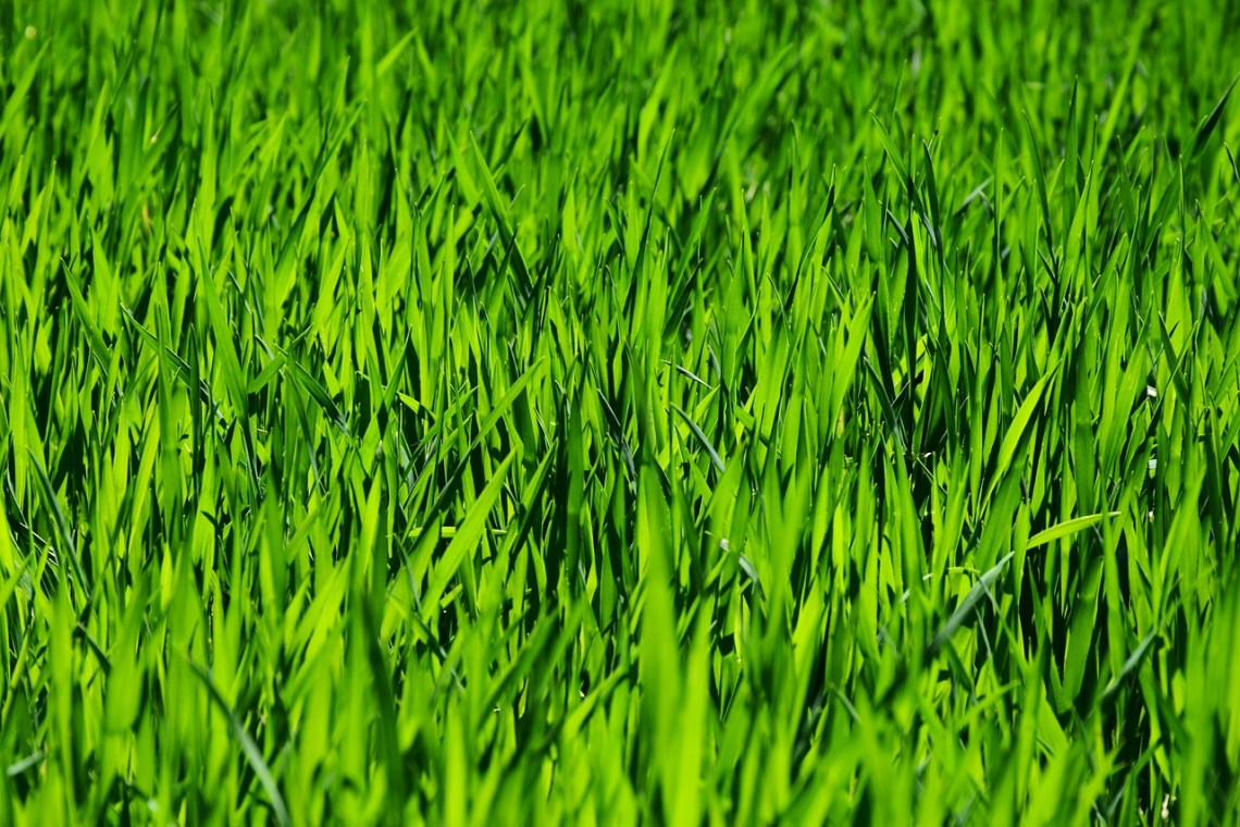 grass-3336700_1280