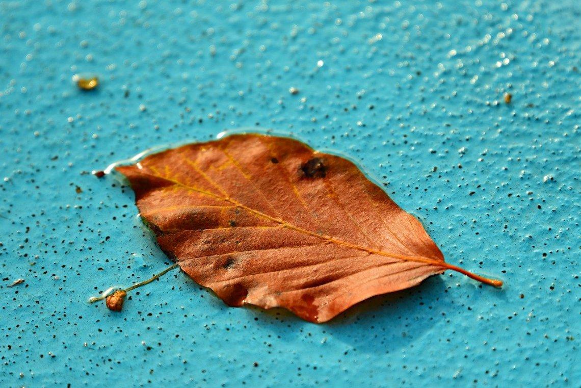 autumn-leaf-3723538_1280(1)