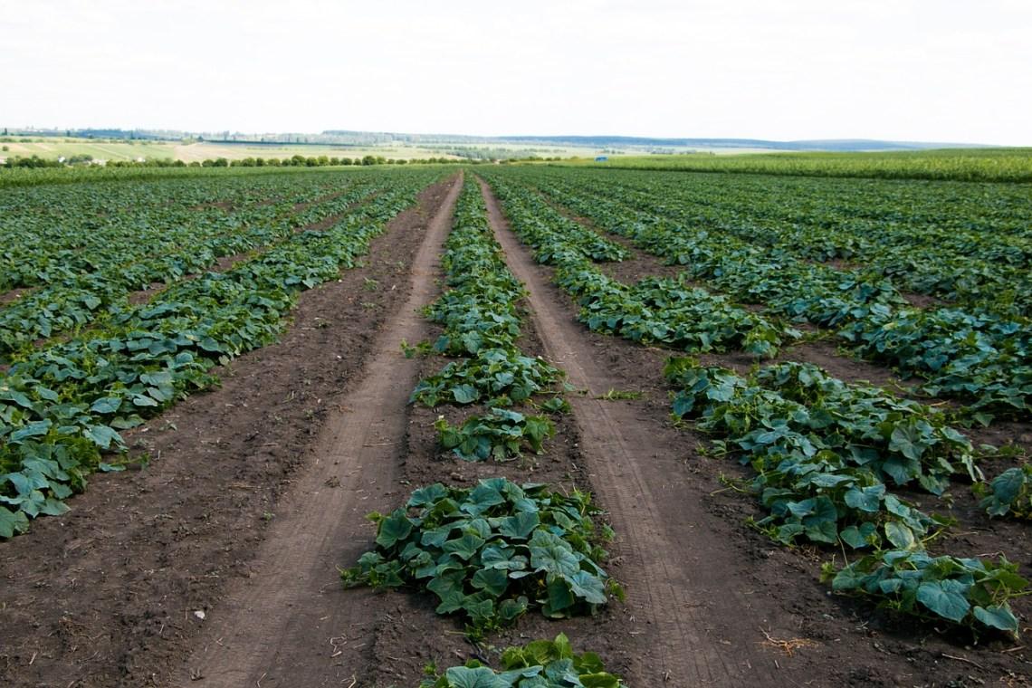 farm-3127785_1280