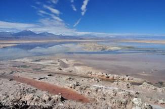 Salar de Atacama : laguna Chaxa. Chili.