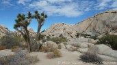 Joshua tree national park, Californie.