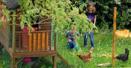 Poulailler dans cabane en bois