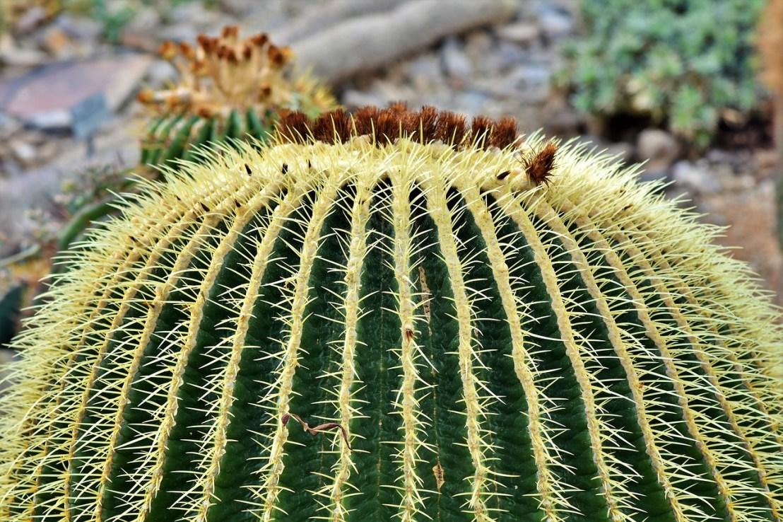 cactus-4000128_1280