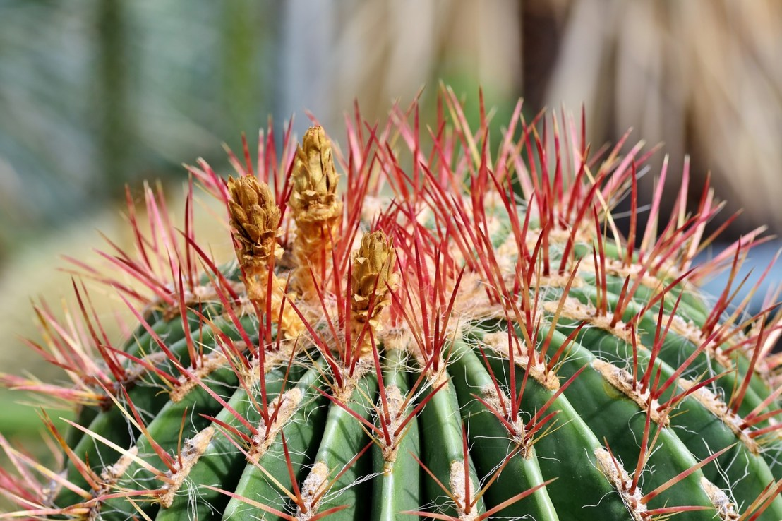 cactus-4113567_1280