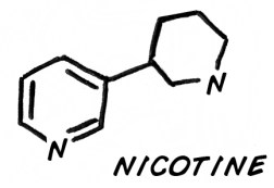 Nicotine is the reason why smokers are under the average weight curve