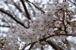 香川県の大池オートキャンプ場へ花見キャンプへ行ってきた!!