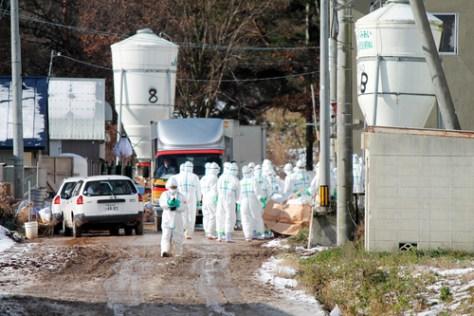 高病原性鳥インフルエンザウイルスが検出された農場で食用アヒルの殺処分を行う県職員ら=29日午前10時35分ごろ、青森市